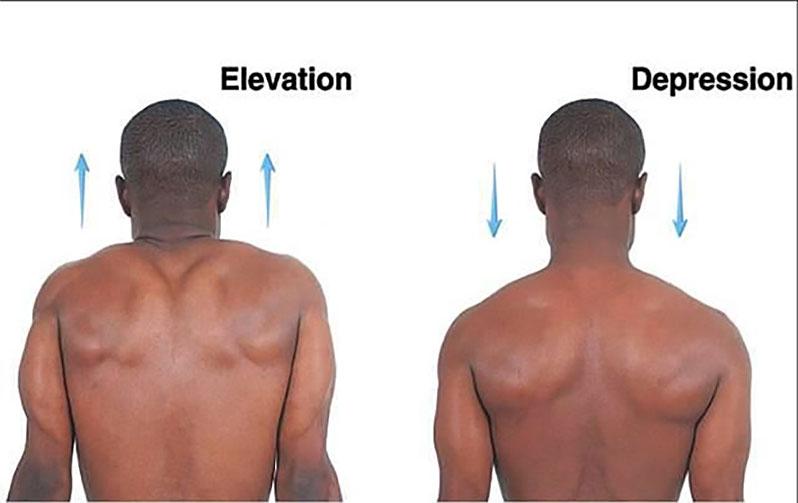 درد گردن و درمان آن، دکتر علی نقره کار