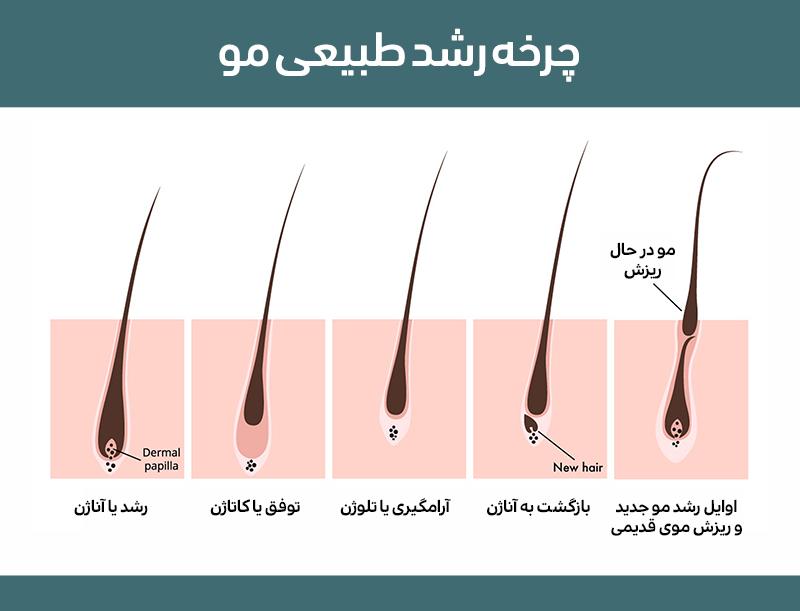 چرخه رشد طبیعی مو کلینیک دکتر پرستو خسروانی بهترین متخصص پوست، مو و زیبایی شهرکرد ایران تهران
