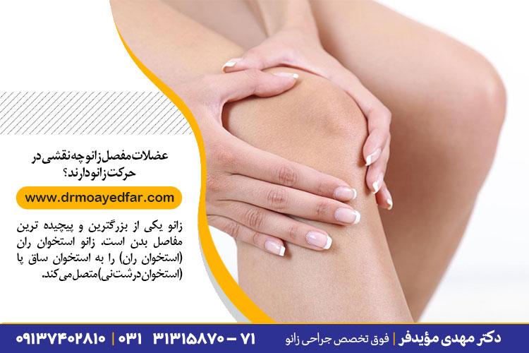 نقش عضلات مفصل زانو