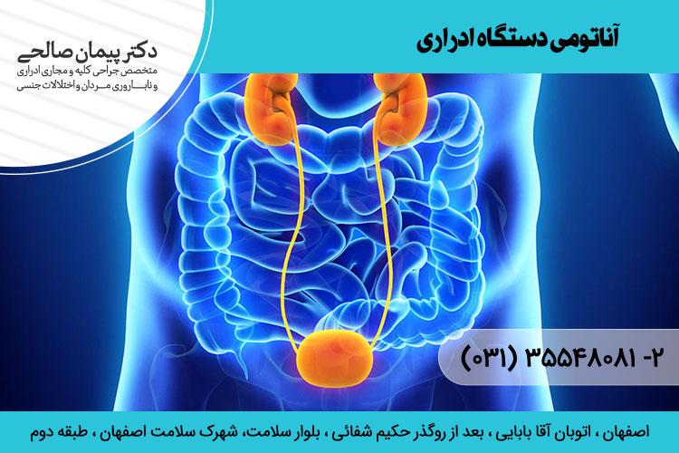 آناتومی دستگاه ادراری ، دکتر پیمان صالحی
