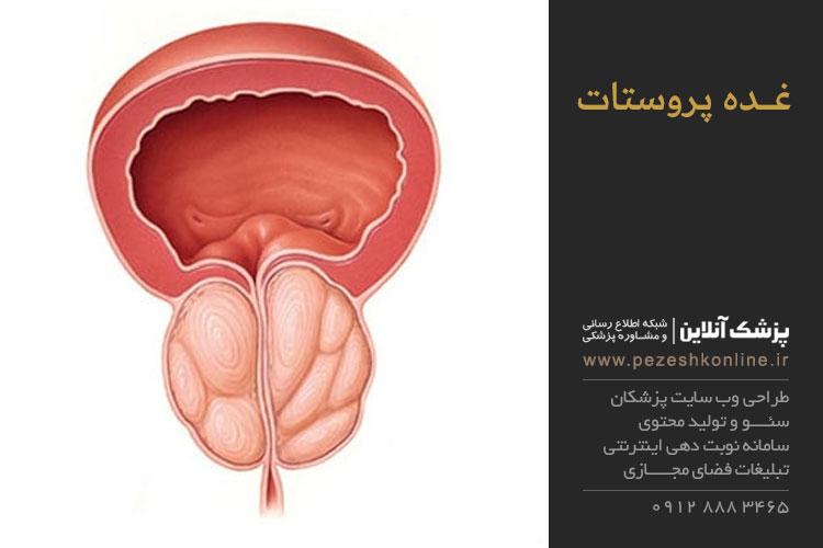 عملکرد غده پروستات